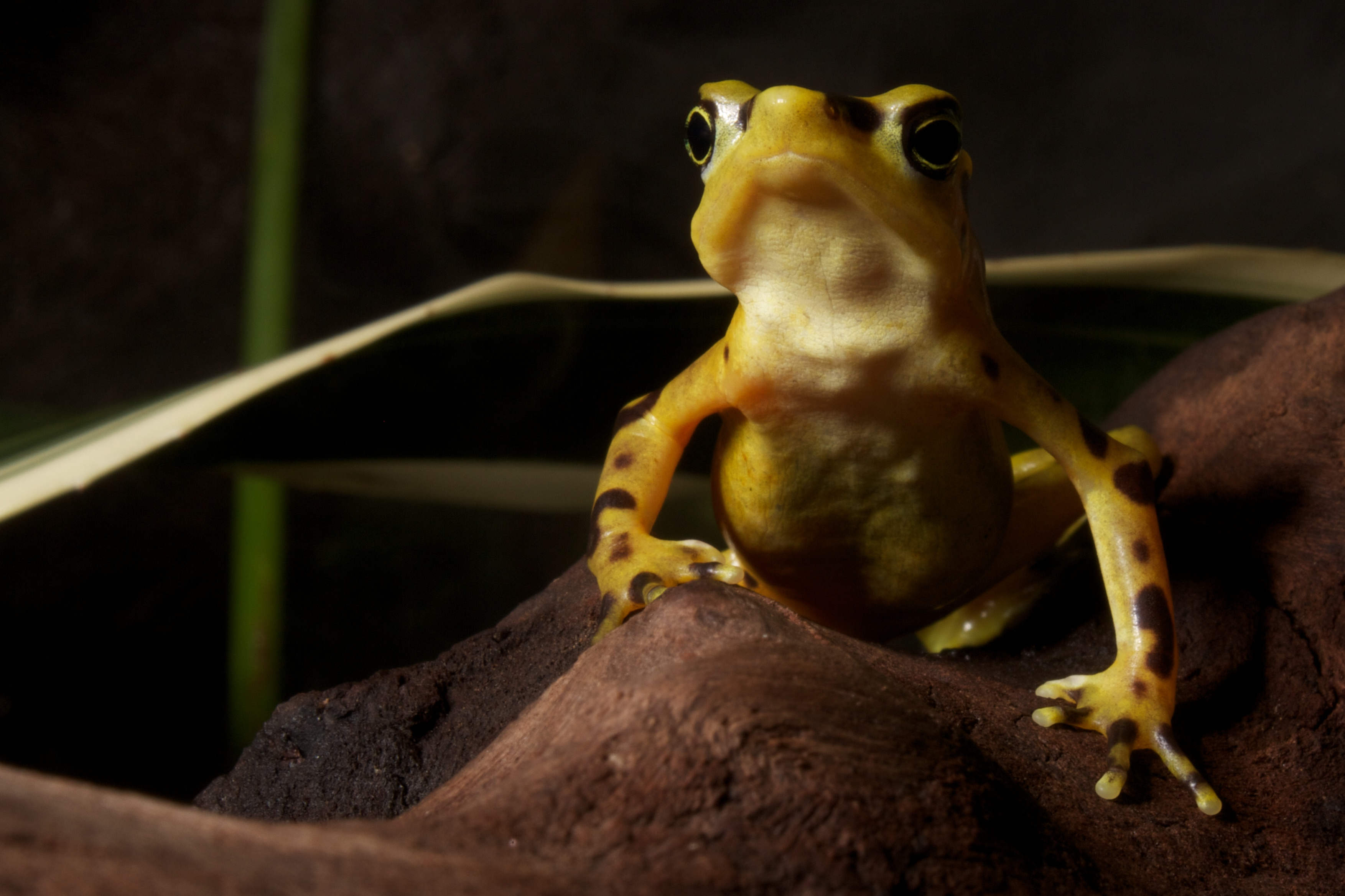 beware central america�s poisonous frogs live and invest
