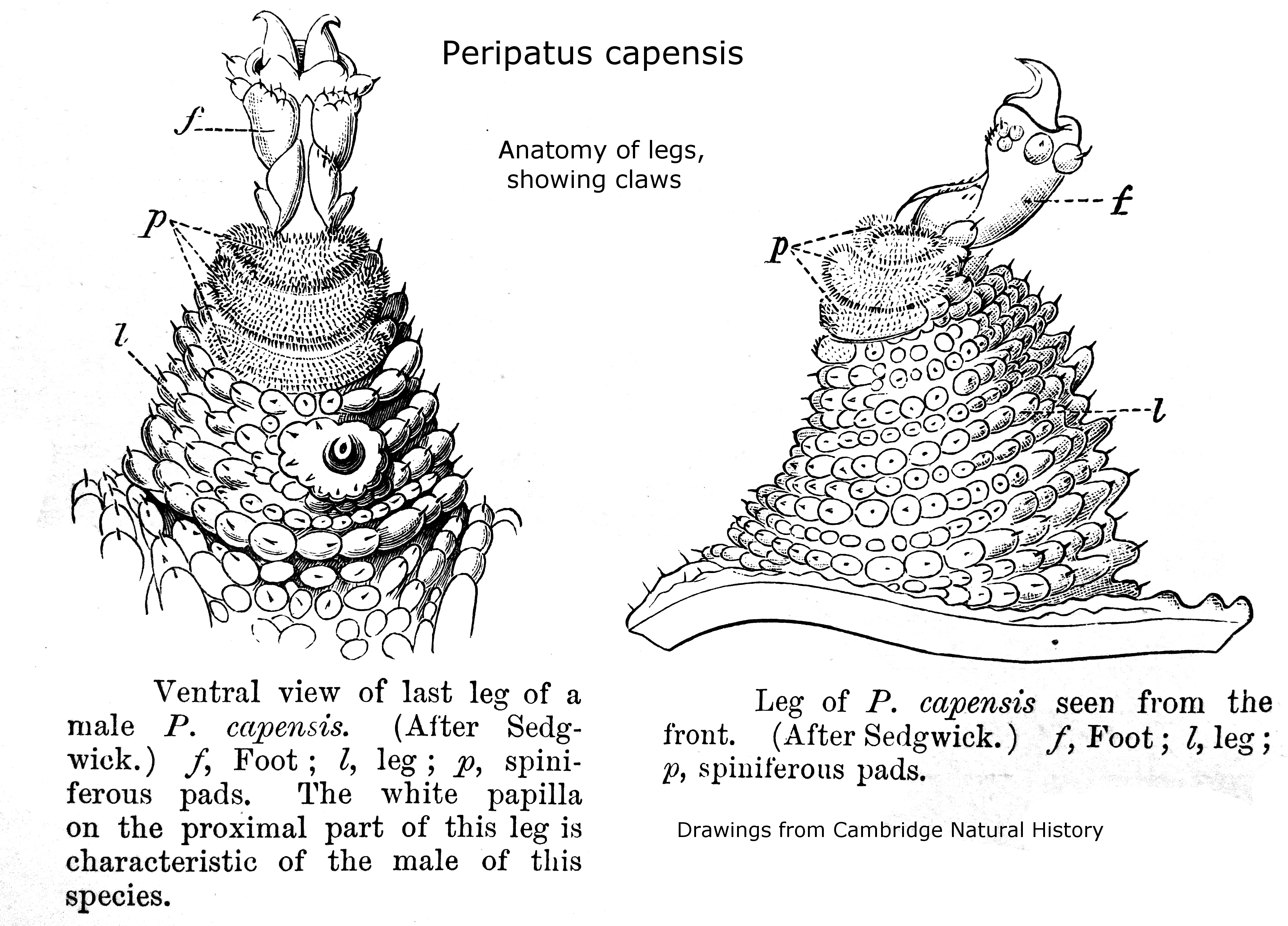 Swarmers Termites Termite Anatomy Structure