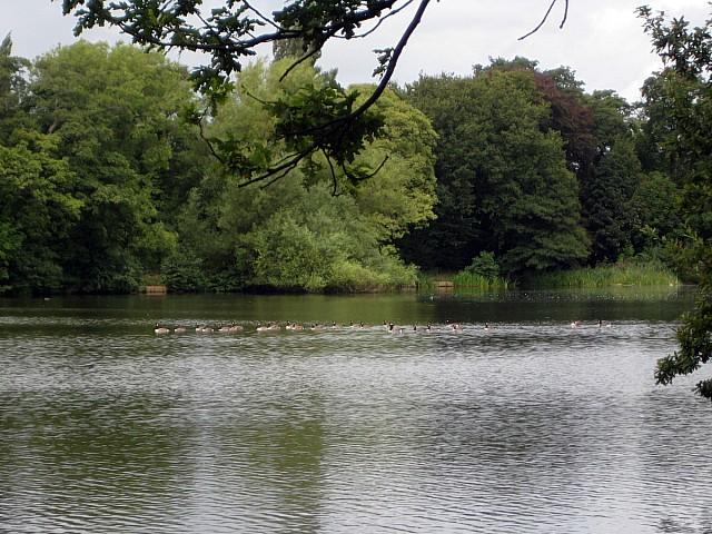 Poynton Lake - geograph.org.uk - 1466377