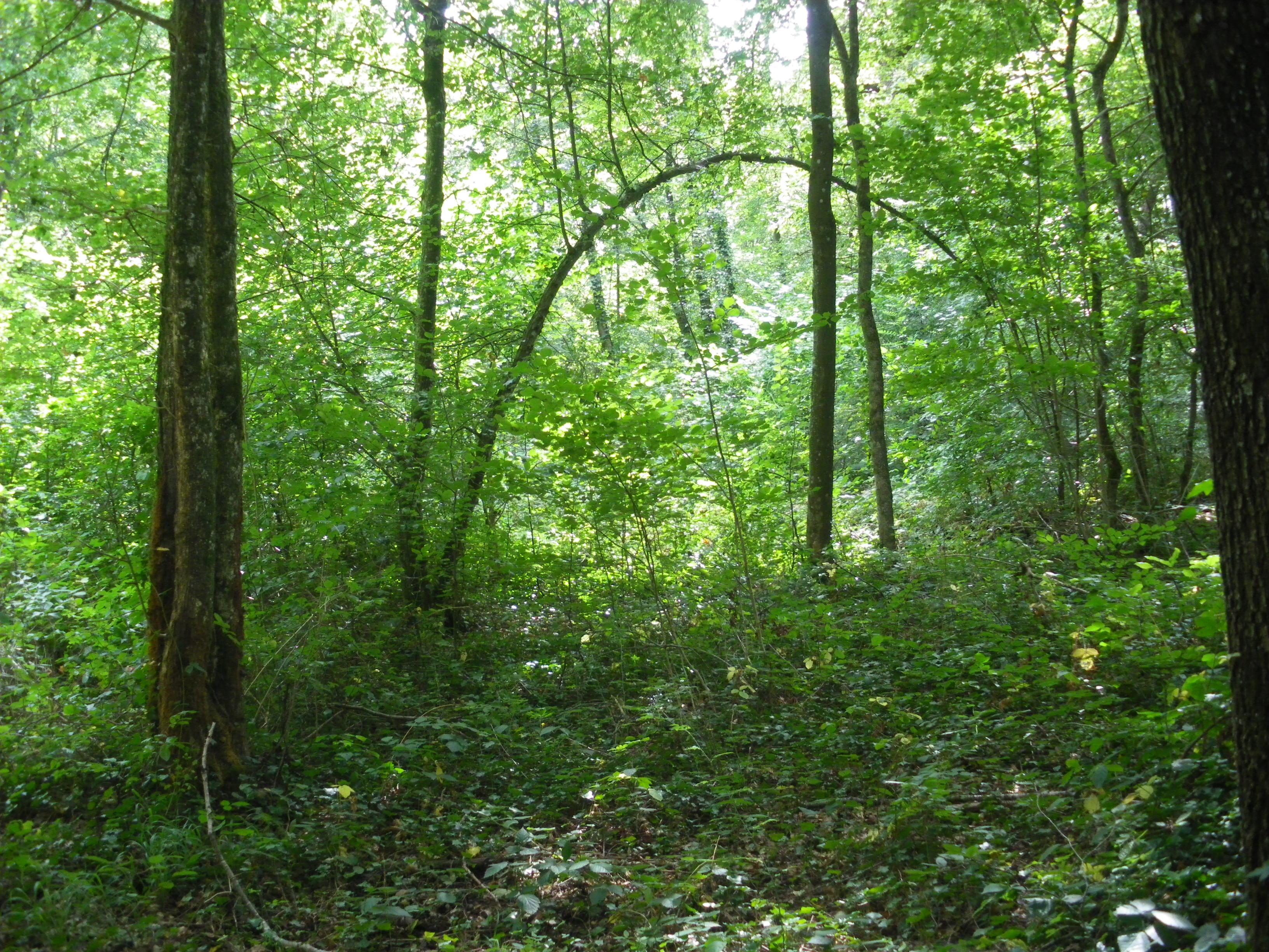 Fichier Sous Bois De La For T De Bannoncourt Jpg Wikip Dia