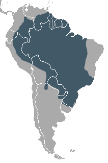 South American Coati area