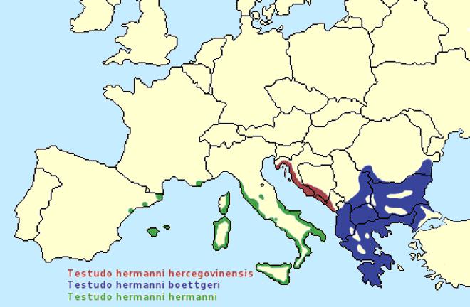 Testudo hermanni range map