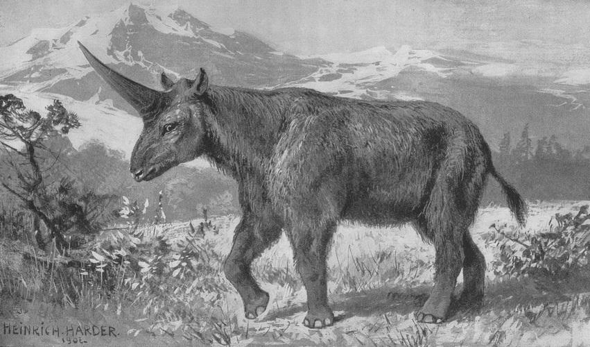 File:1907 500 elasmotherium.jpg - Wikimedia Commons