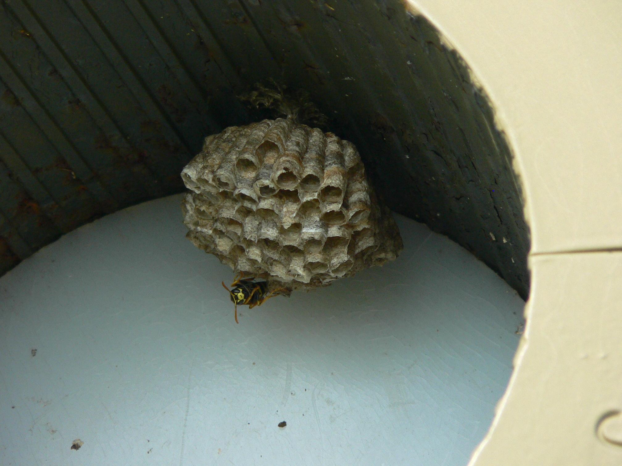 File Apg Hornet Nest Jpg