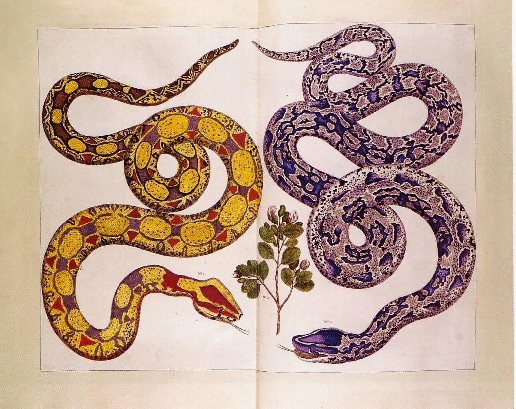 Victorian Scorpio Tattoo Designs