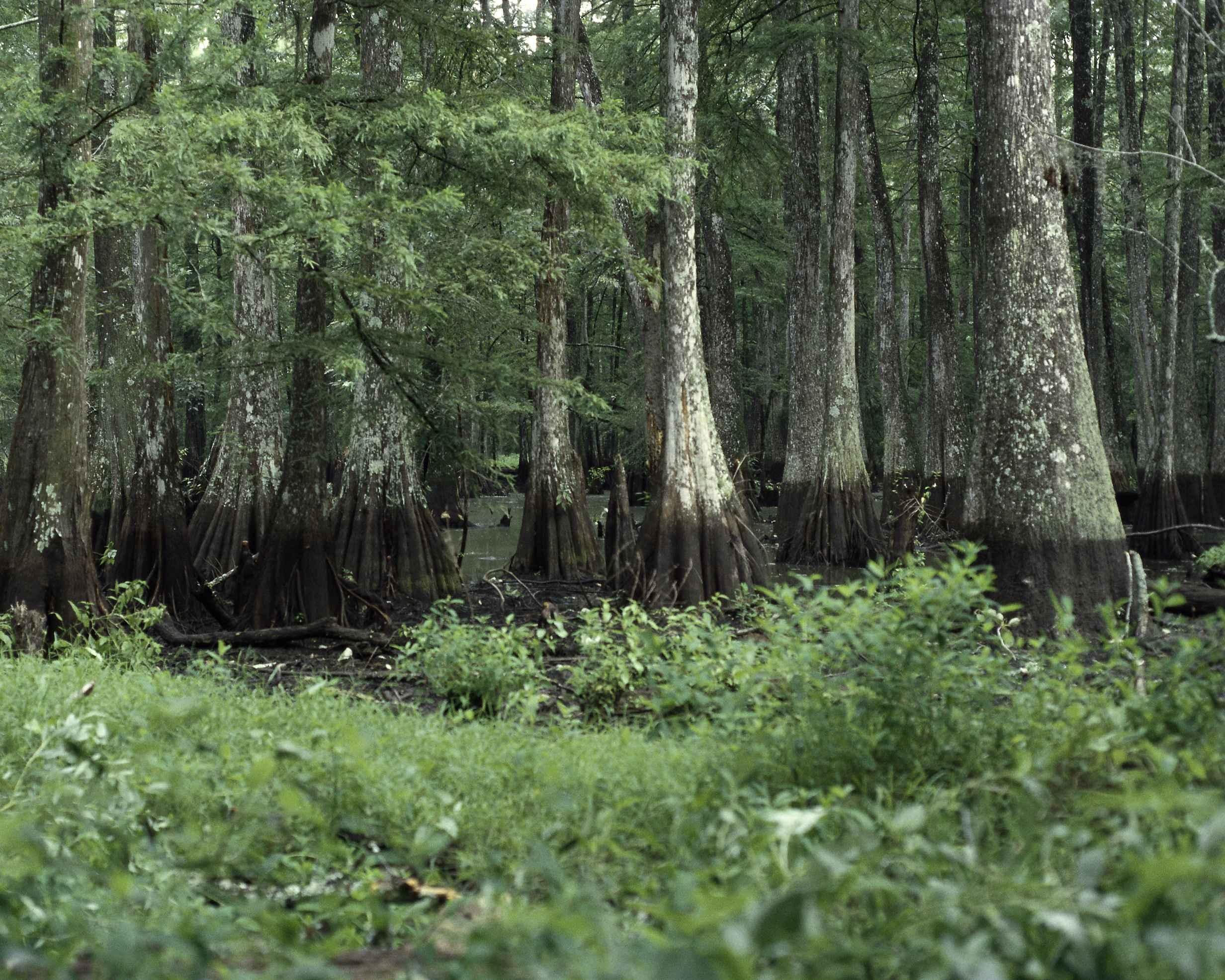 Swamp Trails Palm Beach Florida