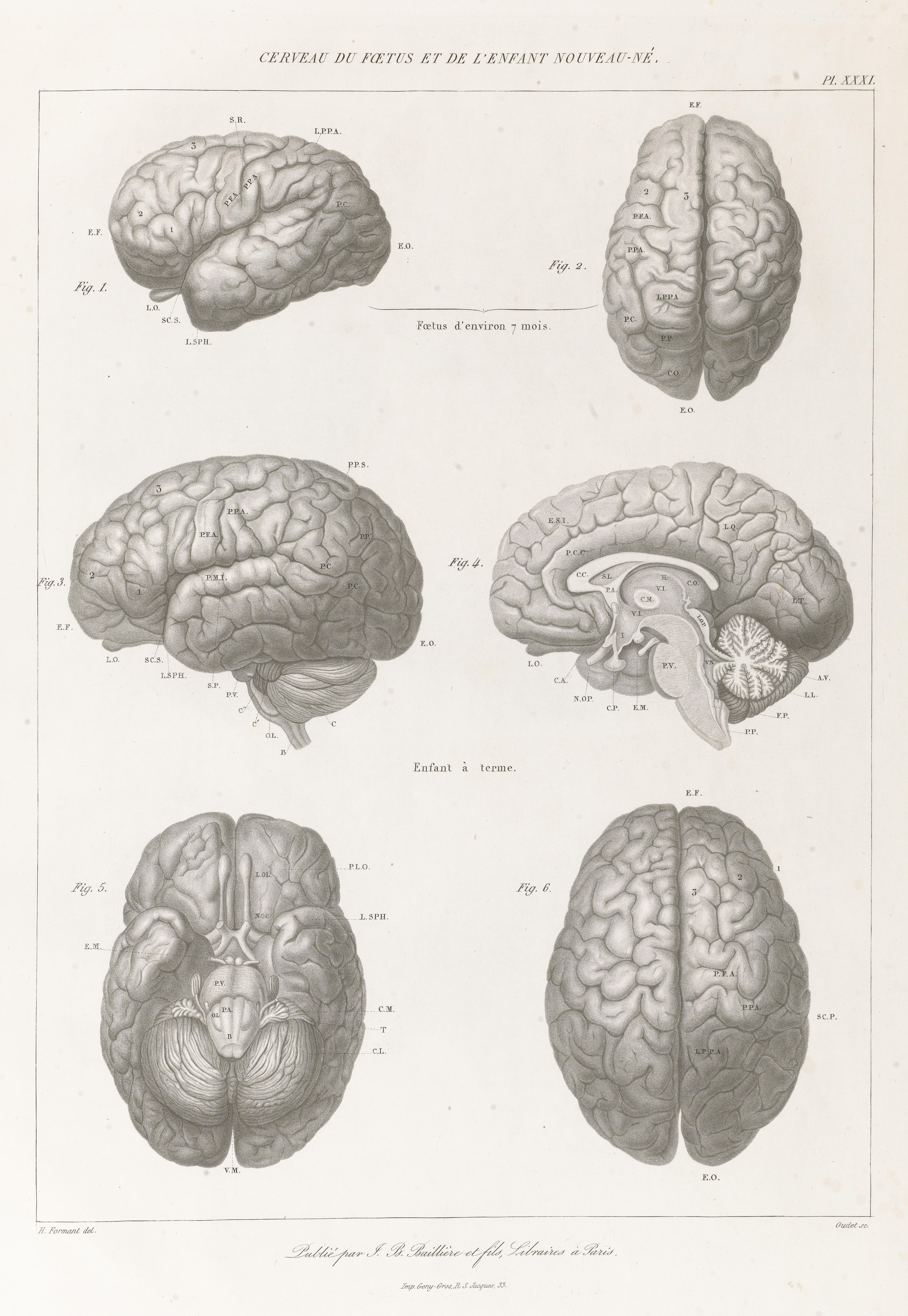 File:Anatomie comparée du système nerveux Wellcome L0068459.jpg ...