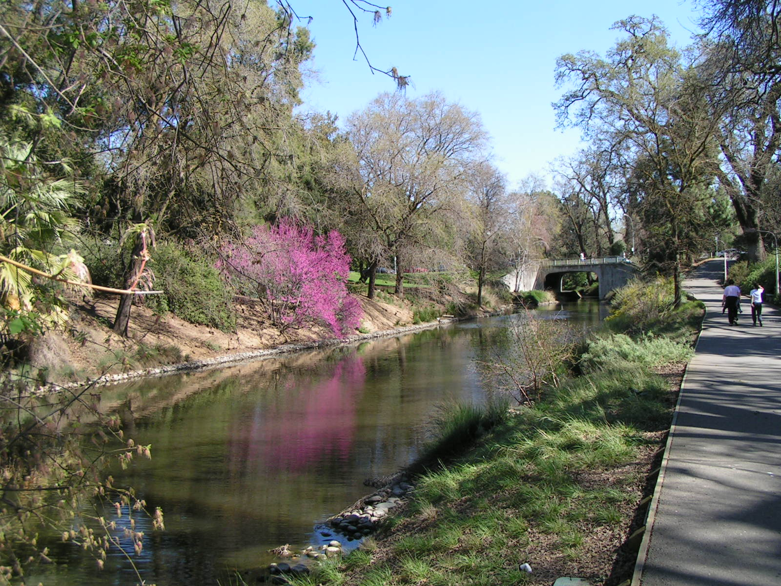 File:Arboretum, UC DAVIS.jpg - Wikipedia, the free encyclopedia