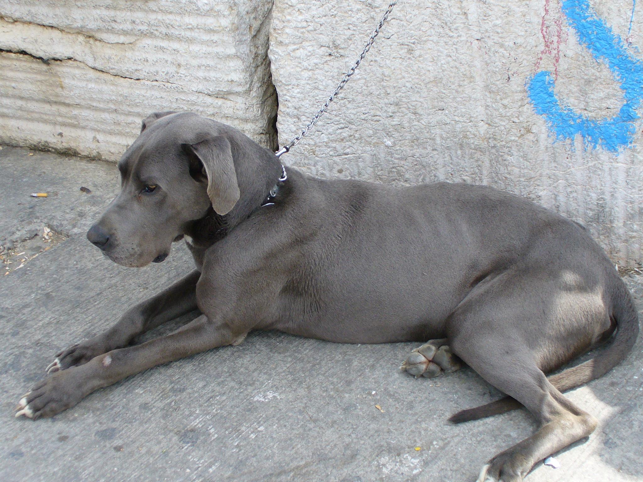 Grey Eyed Dog Breeds