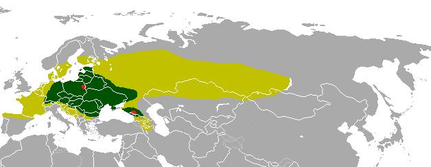 European Bison (Wisent...