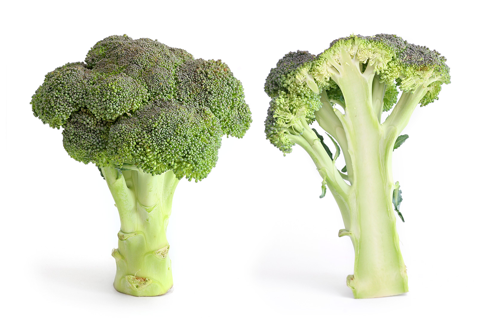 Brokoli Vikipedi