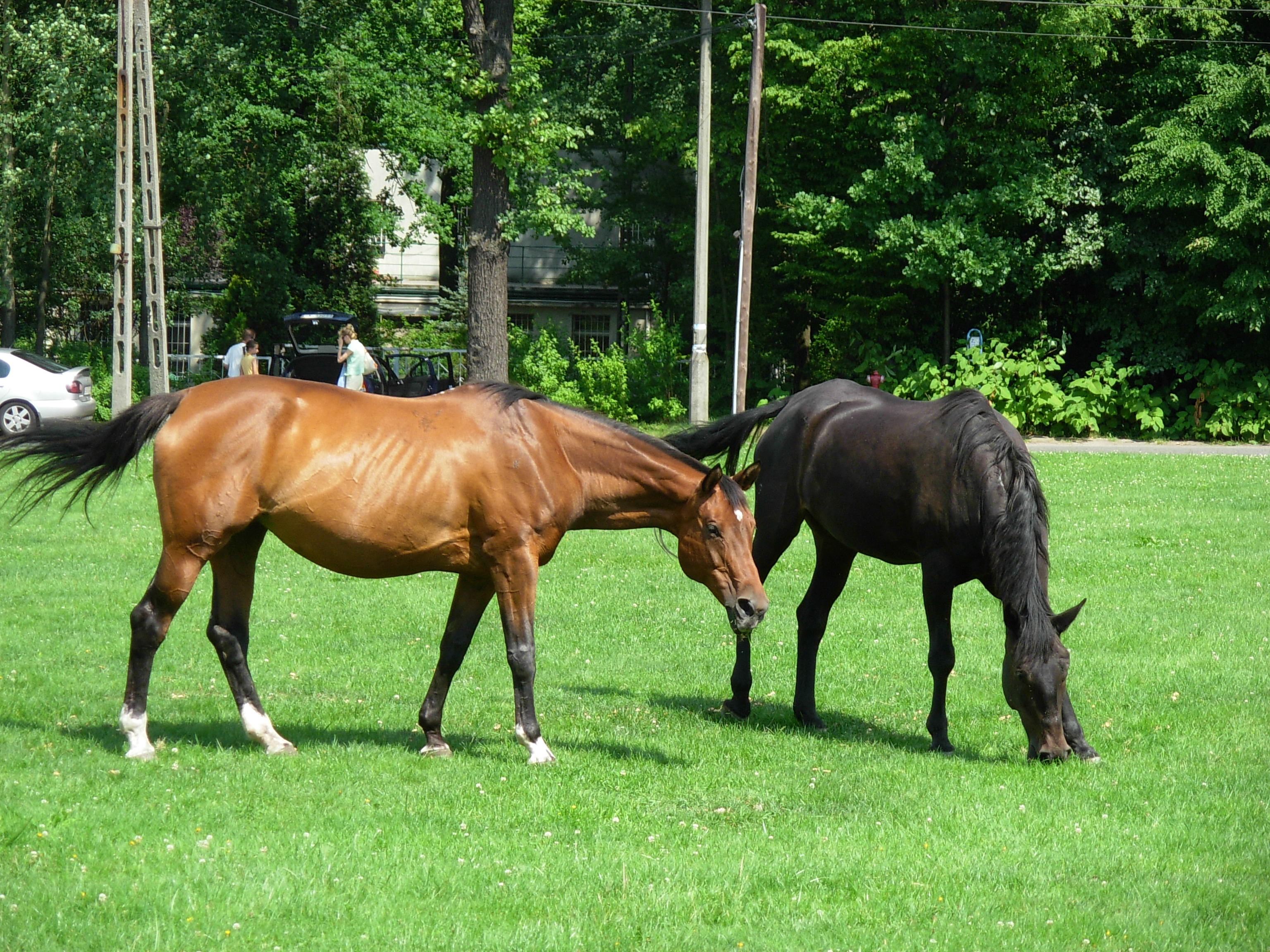 brown horse with black -#main