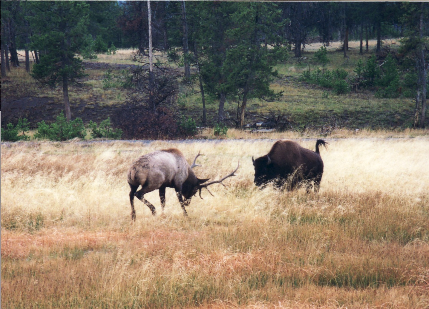 Elk - Wiki - EveripediaElk - 웹
