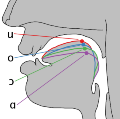 Depiction of Vocal posterior