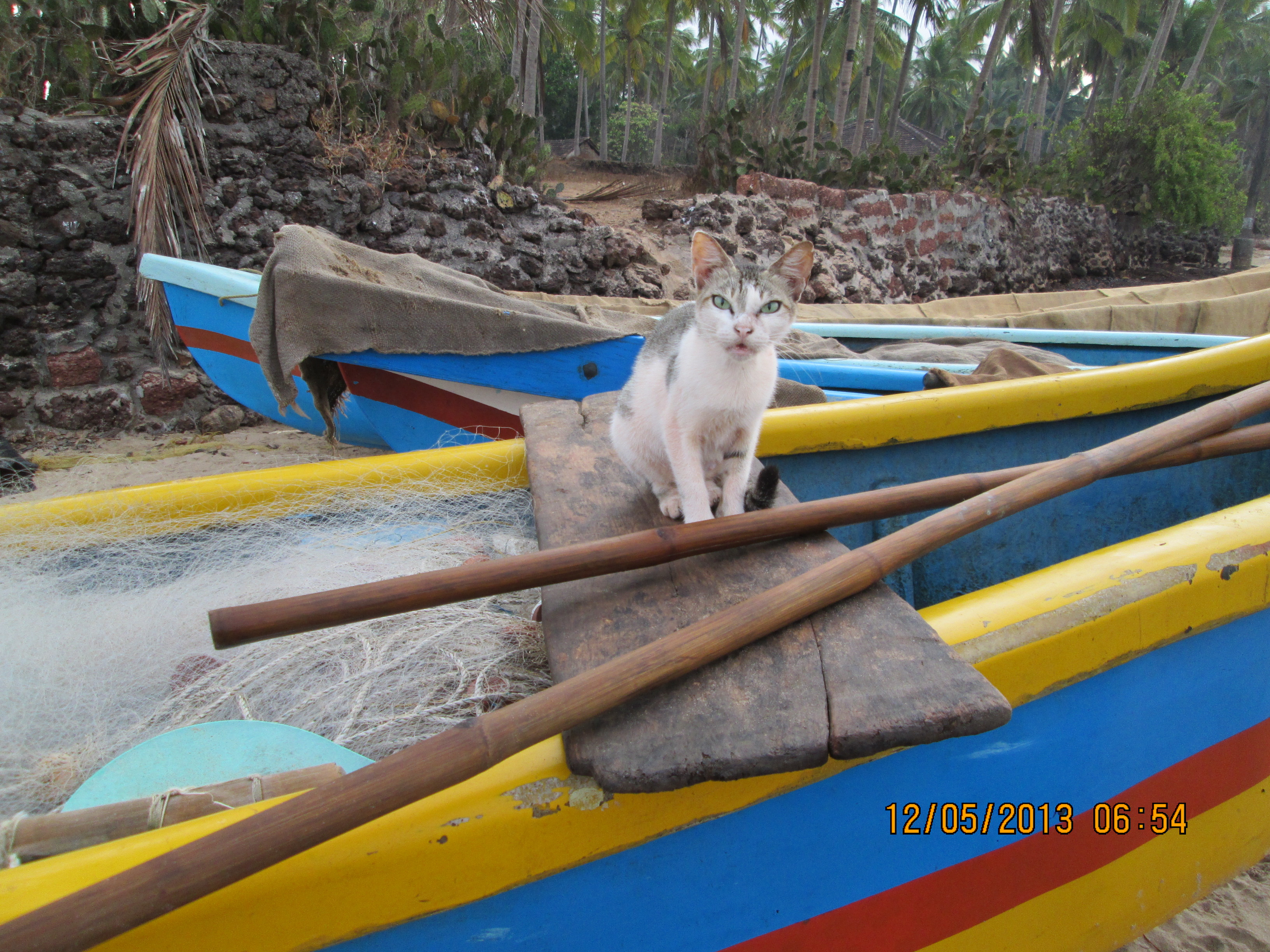 Beach cat commercial boats autos post for Cat goes fishing wiki
