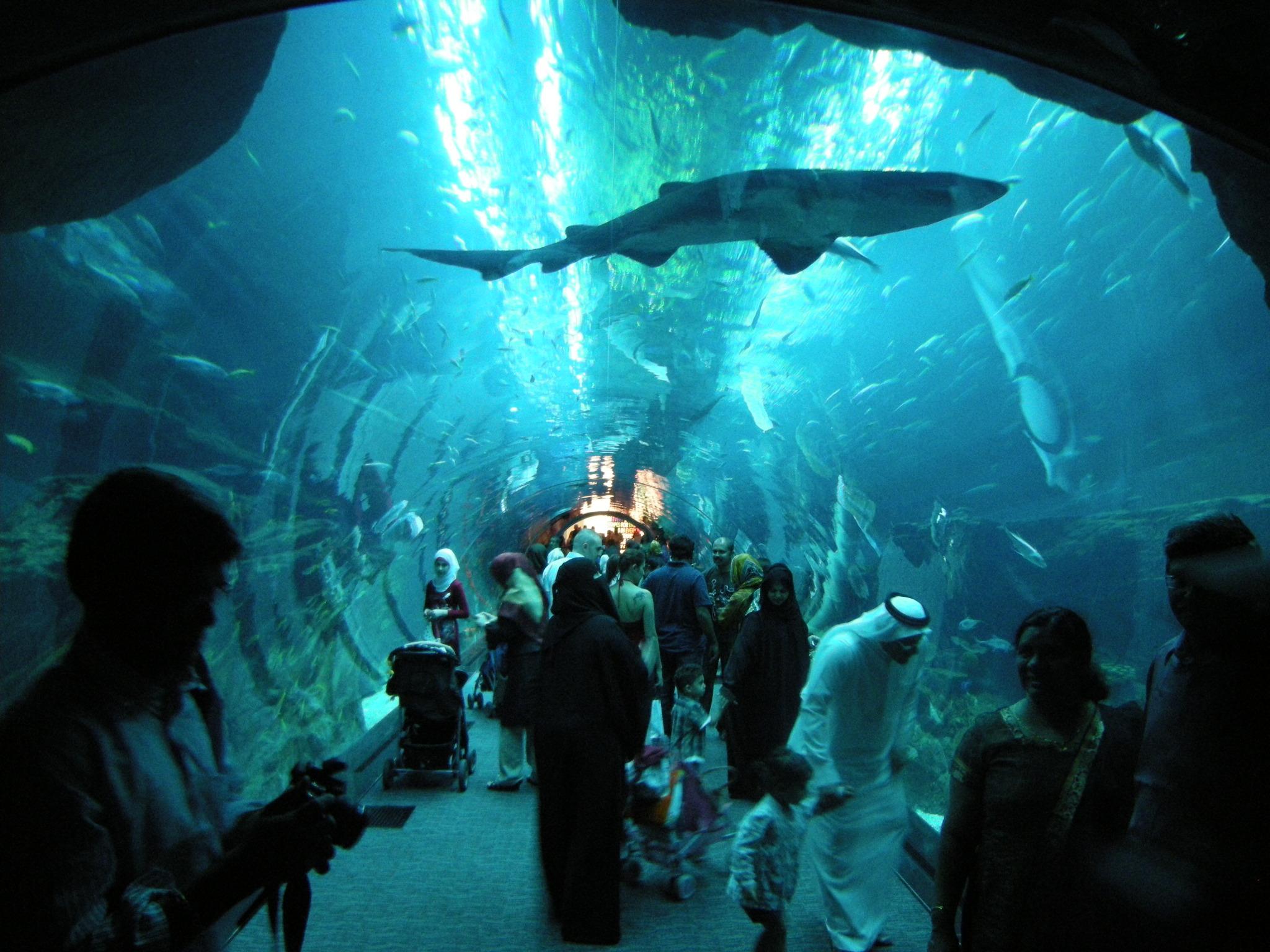 Aquarium An Underwater Dining Adventure Locations