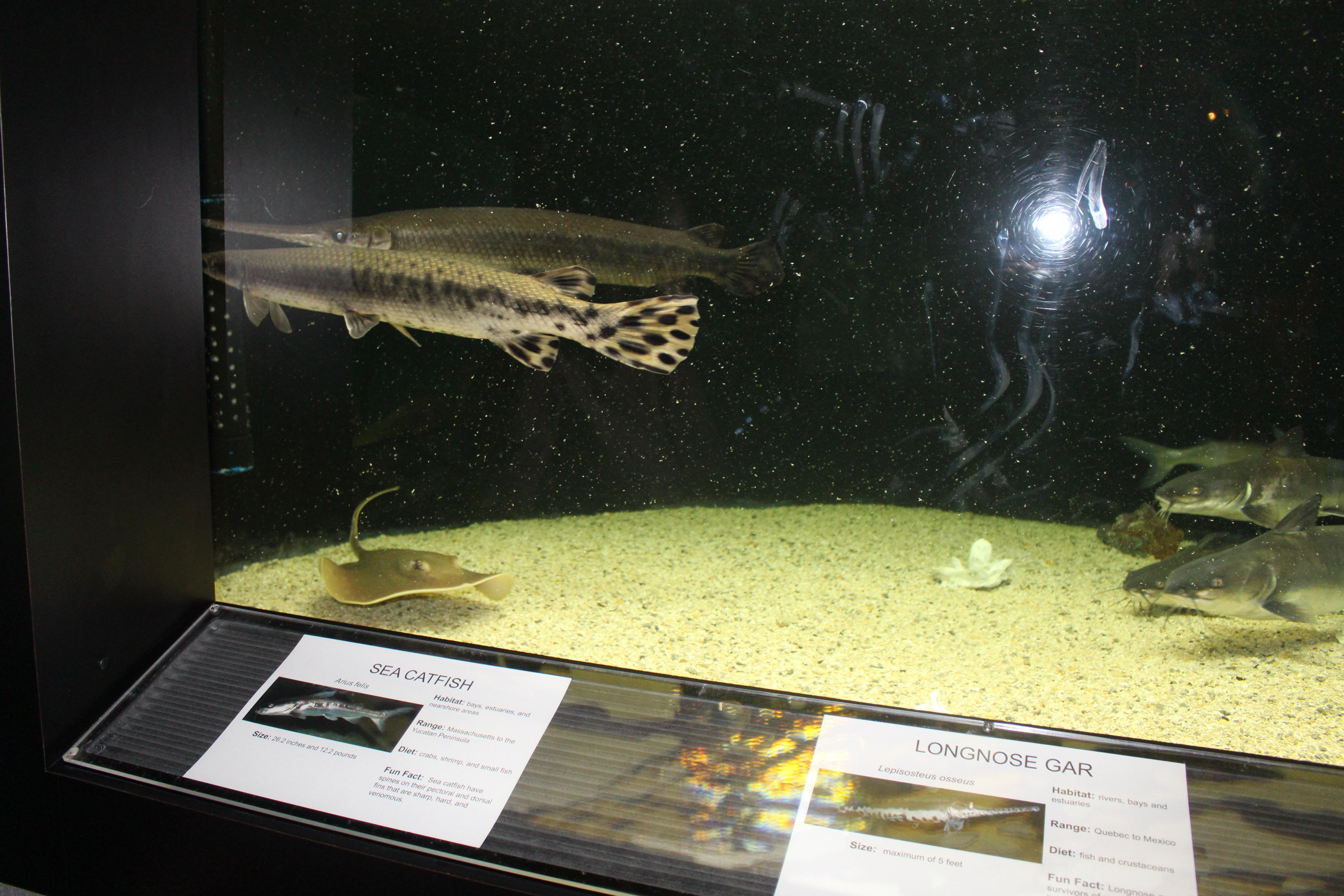 Freshwater aquarium fish massachusetts - File Exhibit 4 Center For Marine Education Aquarium Jpg