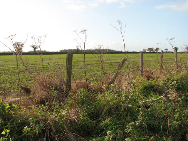 Field adjoining the Bure Valley Walk and Railway - geograph.org.uk - 1059282