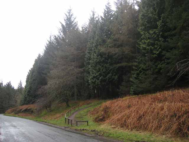 Forest trail, Whinlatter Forest - geograph.org.uk - 759388