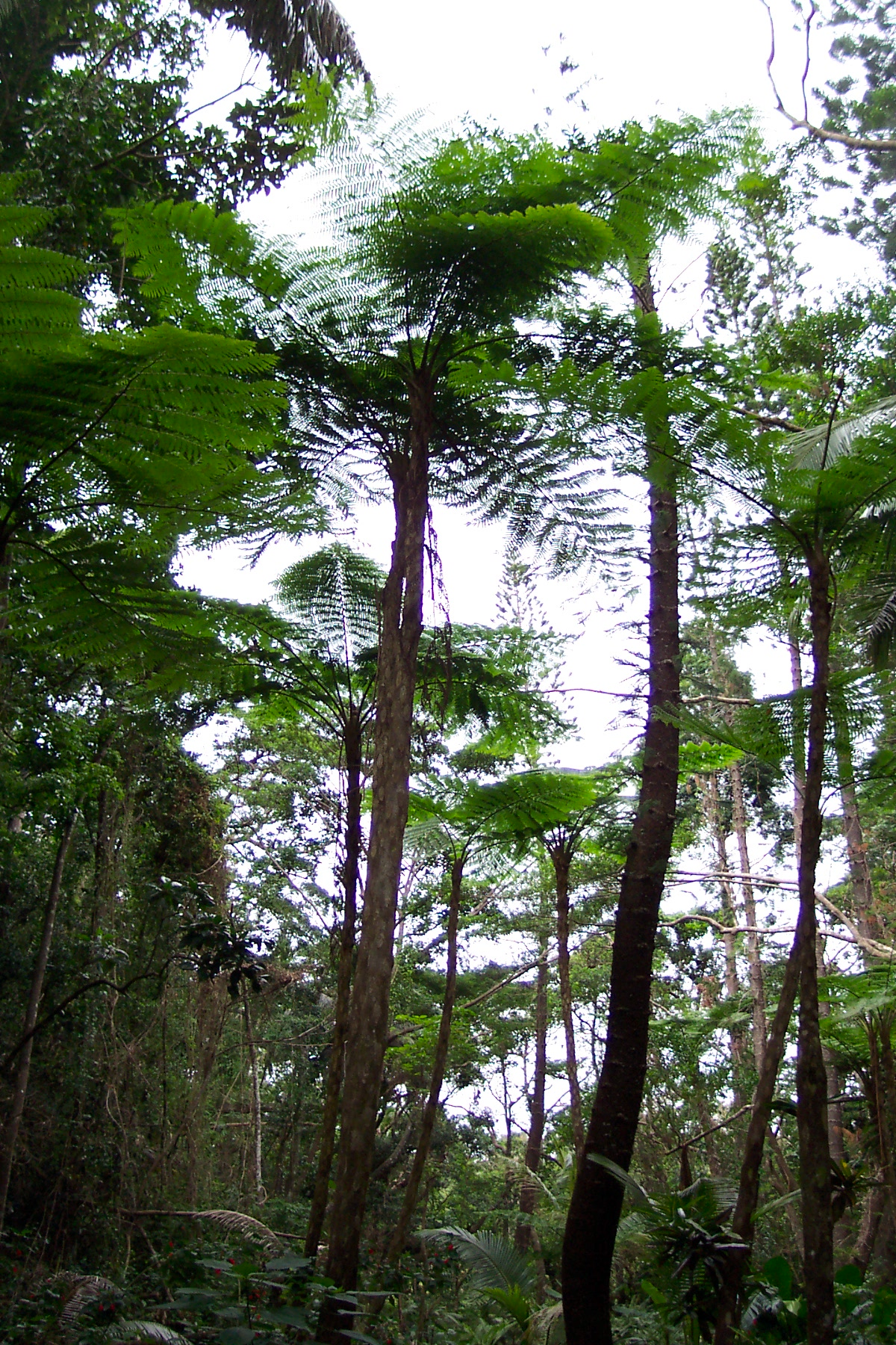 Biodiversit 233 De La Nouvelle Cal 233 Donie Wikip 233 Dia