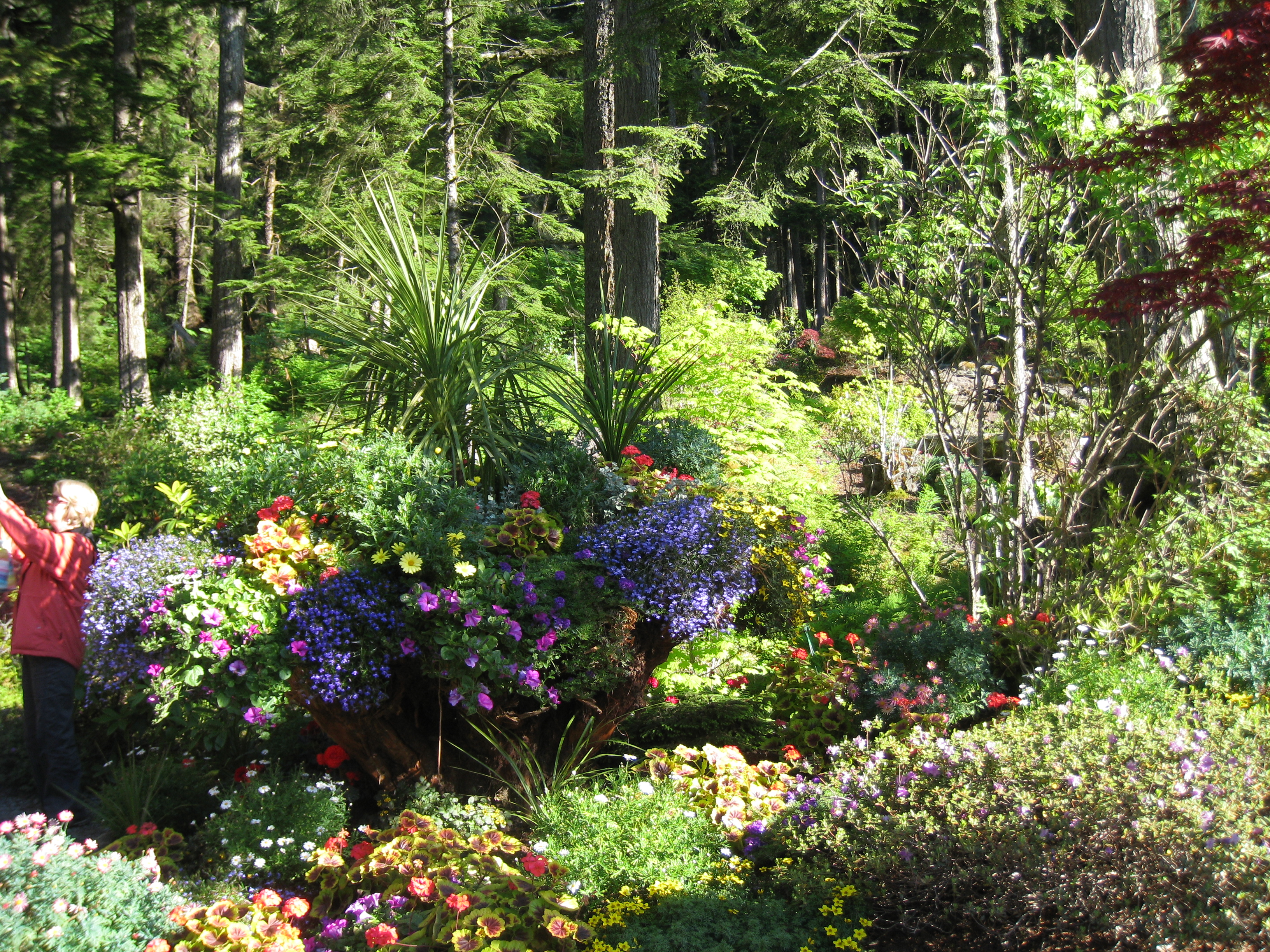 file glacier gardens outside juneau features plantings in