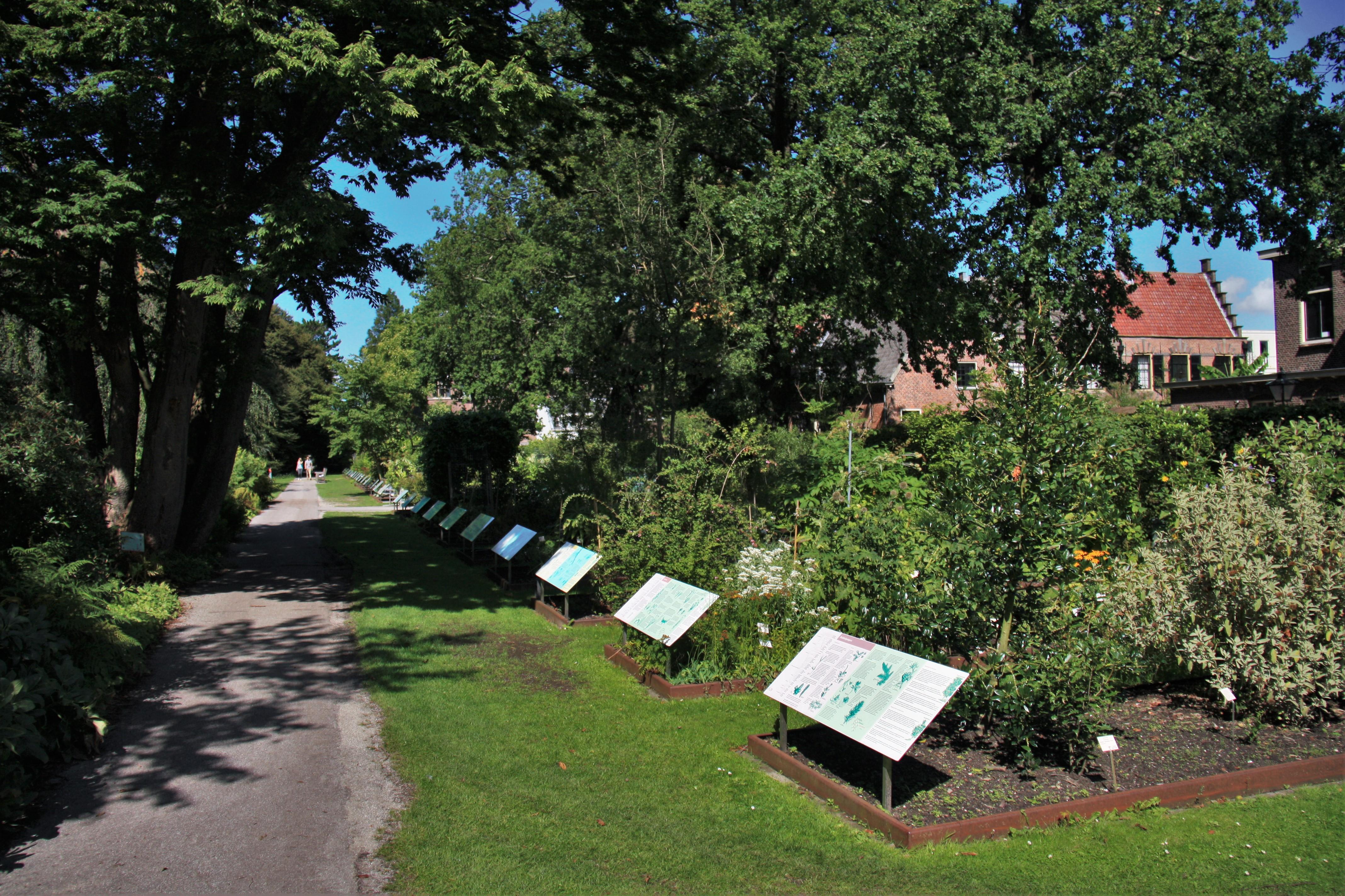 Botanische Tuin Leiden : File hortus botanicus leiden systematic garden g wikimedia