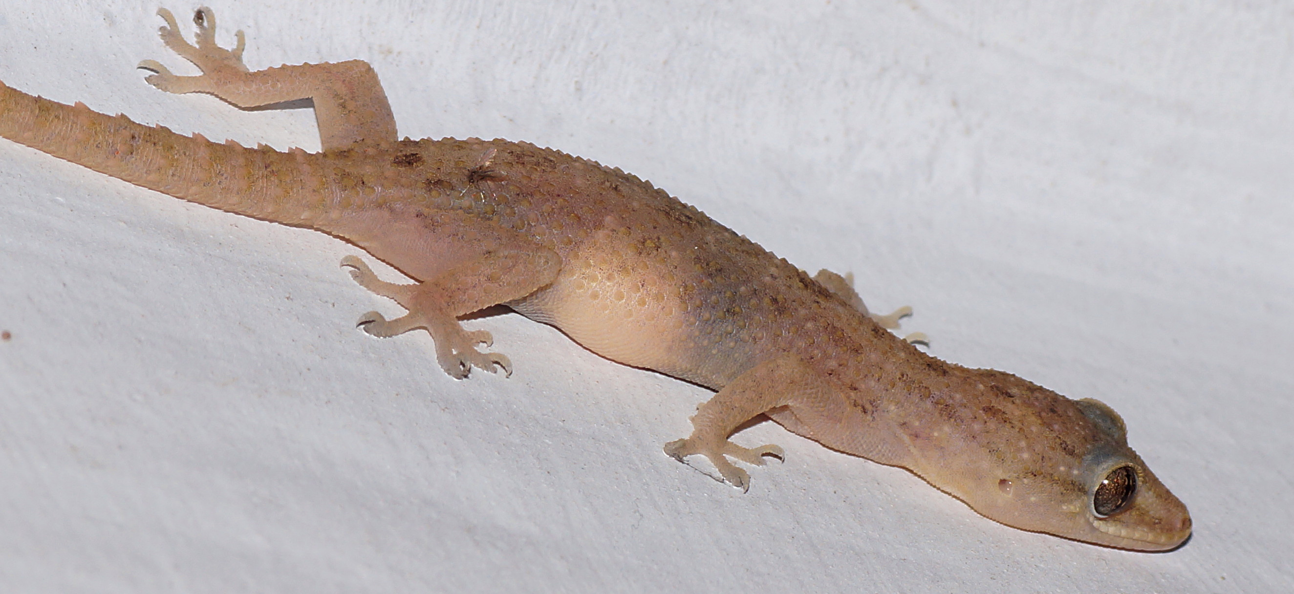 picture of house gecko - house interior