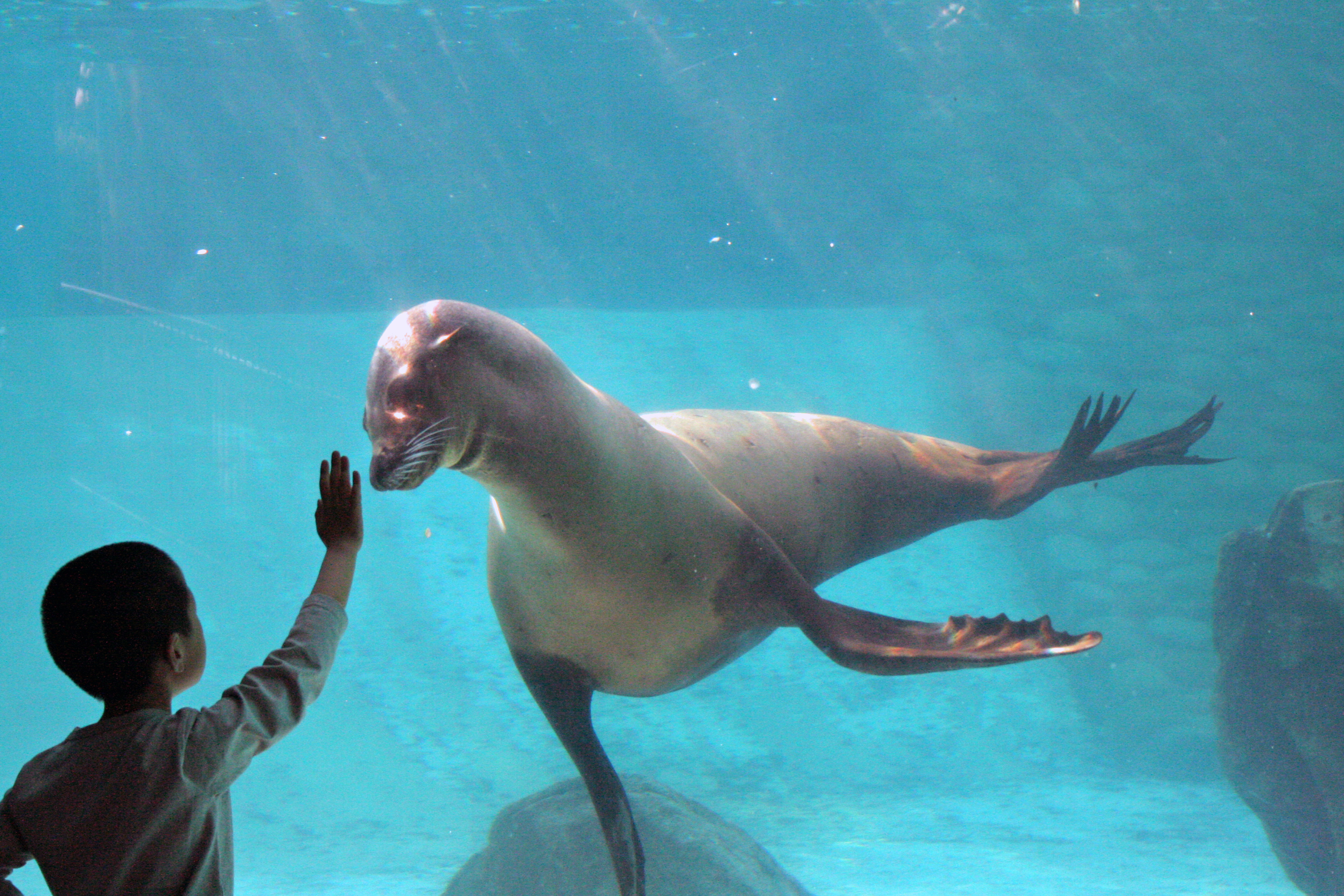Tortoises and Sea Lions in the Galapagos Islands (PHOTOS ...