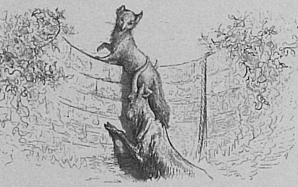 Le renard et le bouc - Jean de La Fontaine Le_Renard_et_le_Bouc
