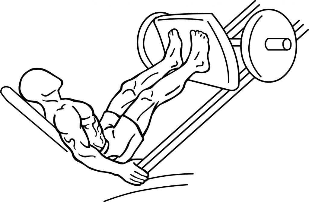 File:Leg-press-1-1024x670.png - Wikimedia Commons