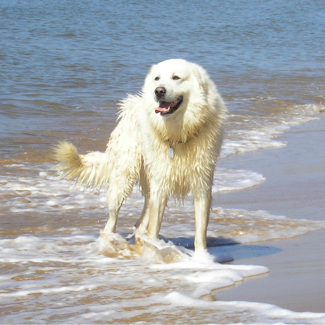 Image Result For Dog Breed That