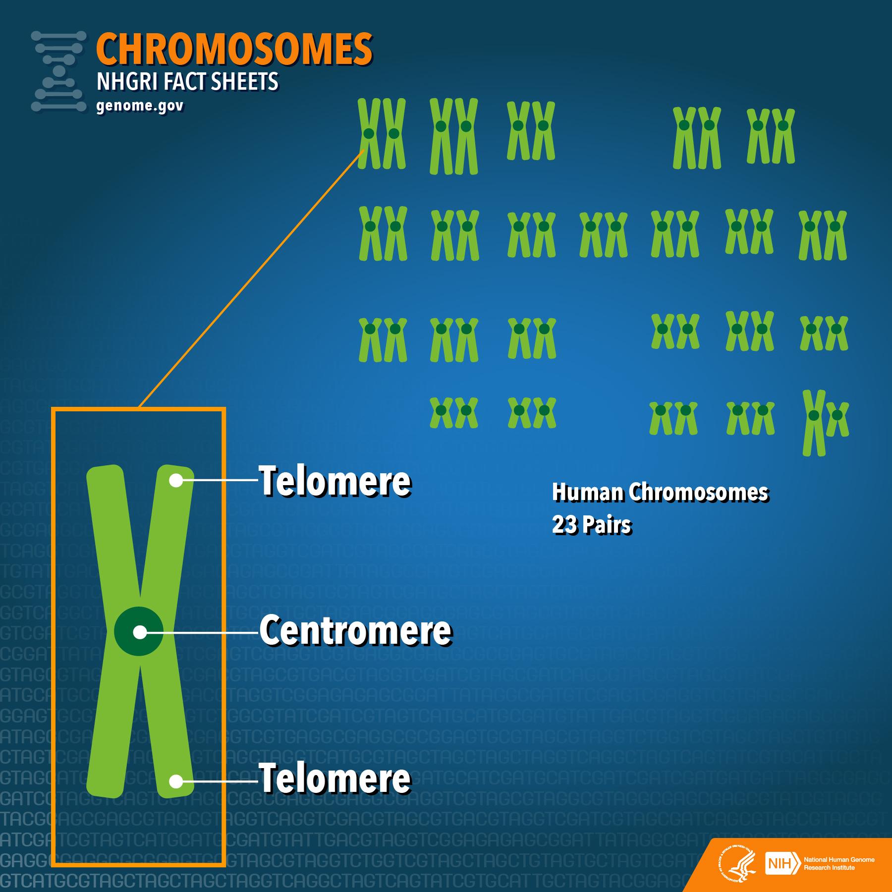 chromosome and chromatid relationship tips