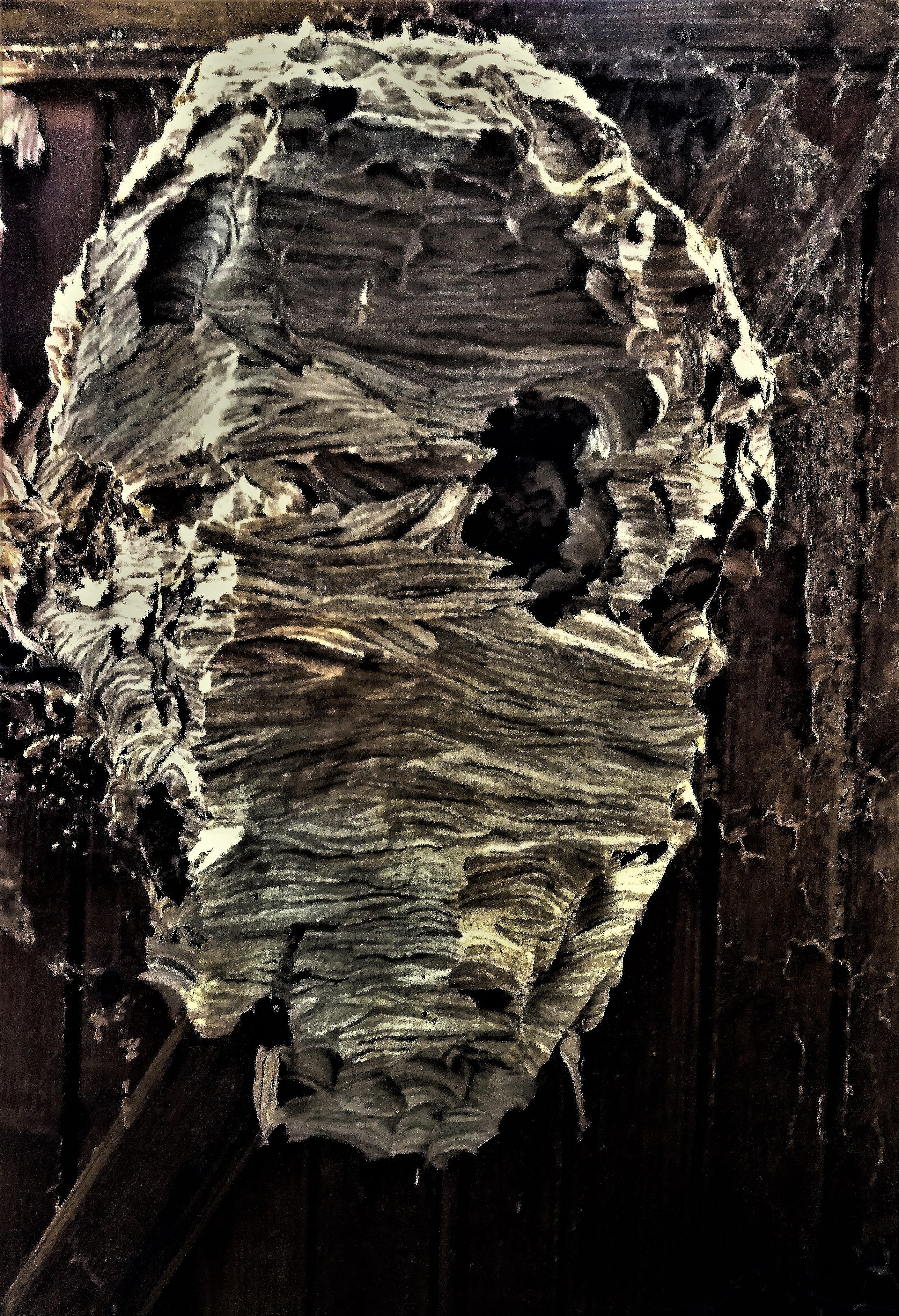 """Résultat de recherche d'images pour """"nid de frelon asiatique"""""""