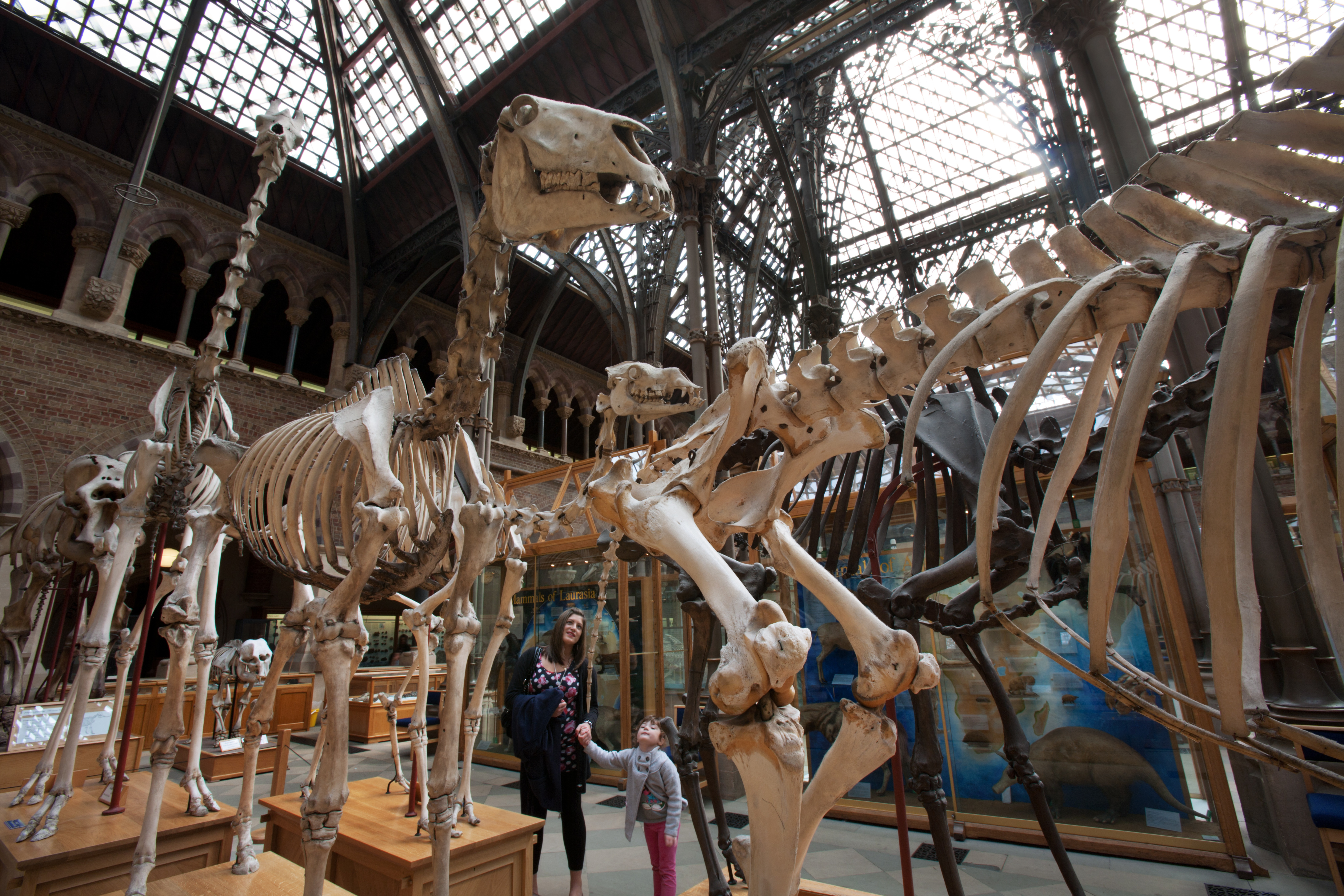 Oxford University Museum Of Natural History Wiki