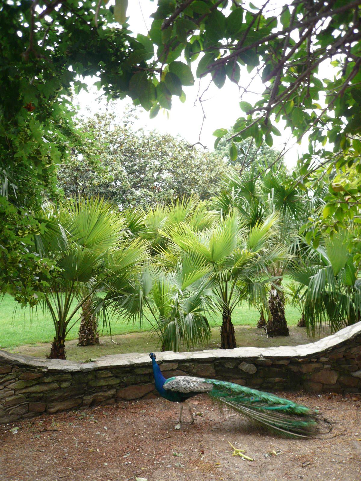 File p1000825 faune et flore au jardin riquier jpg for Jardin olbius riquier