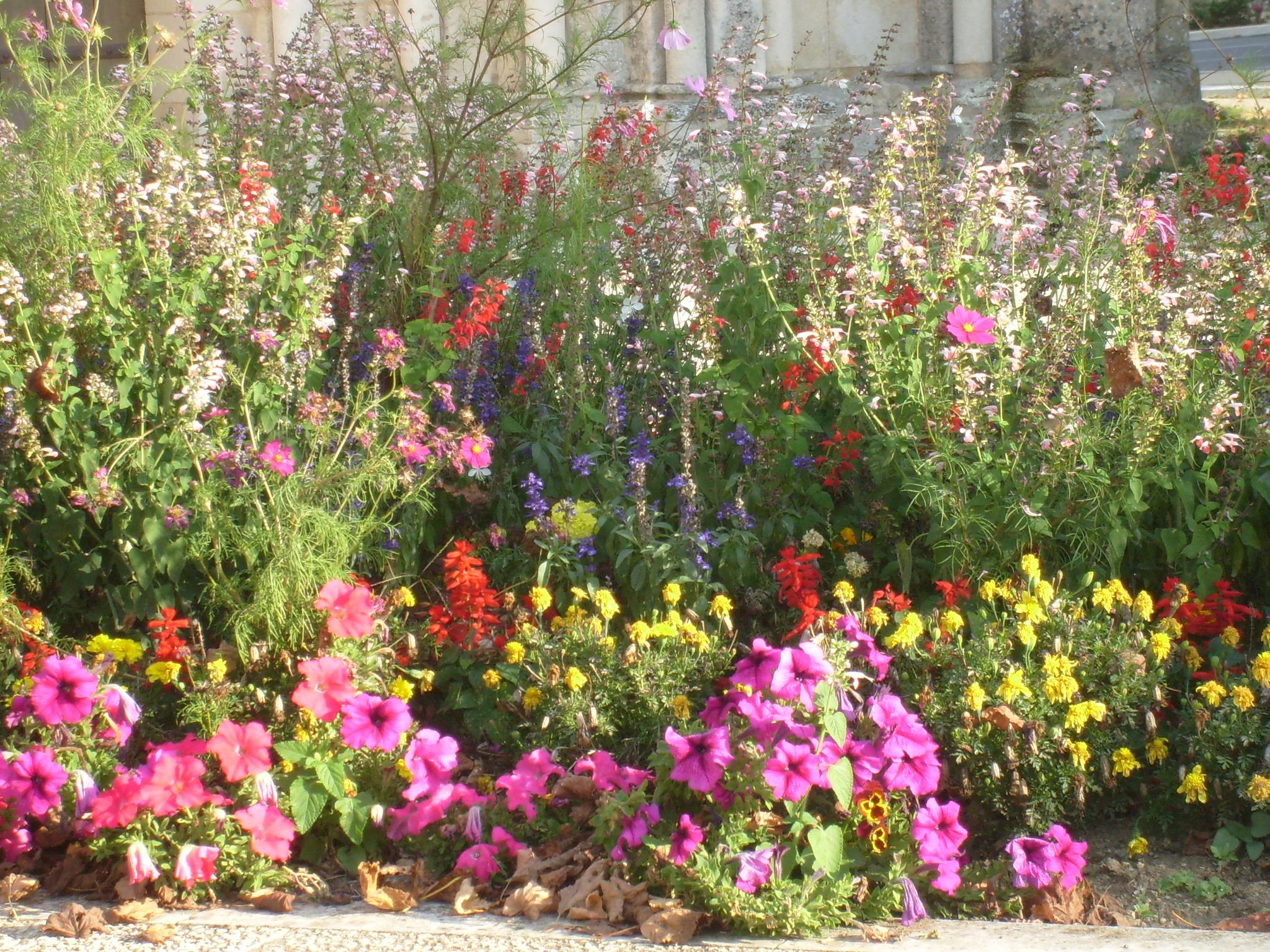 file parterre de fleurs 224 tesson jpg wikimedia commons