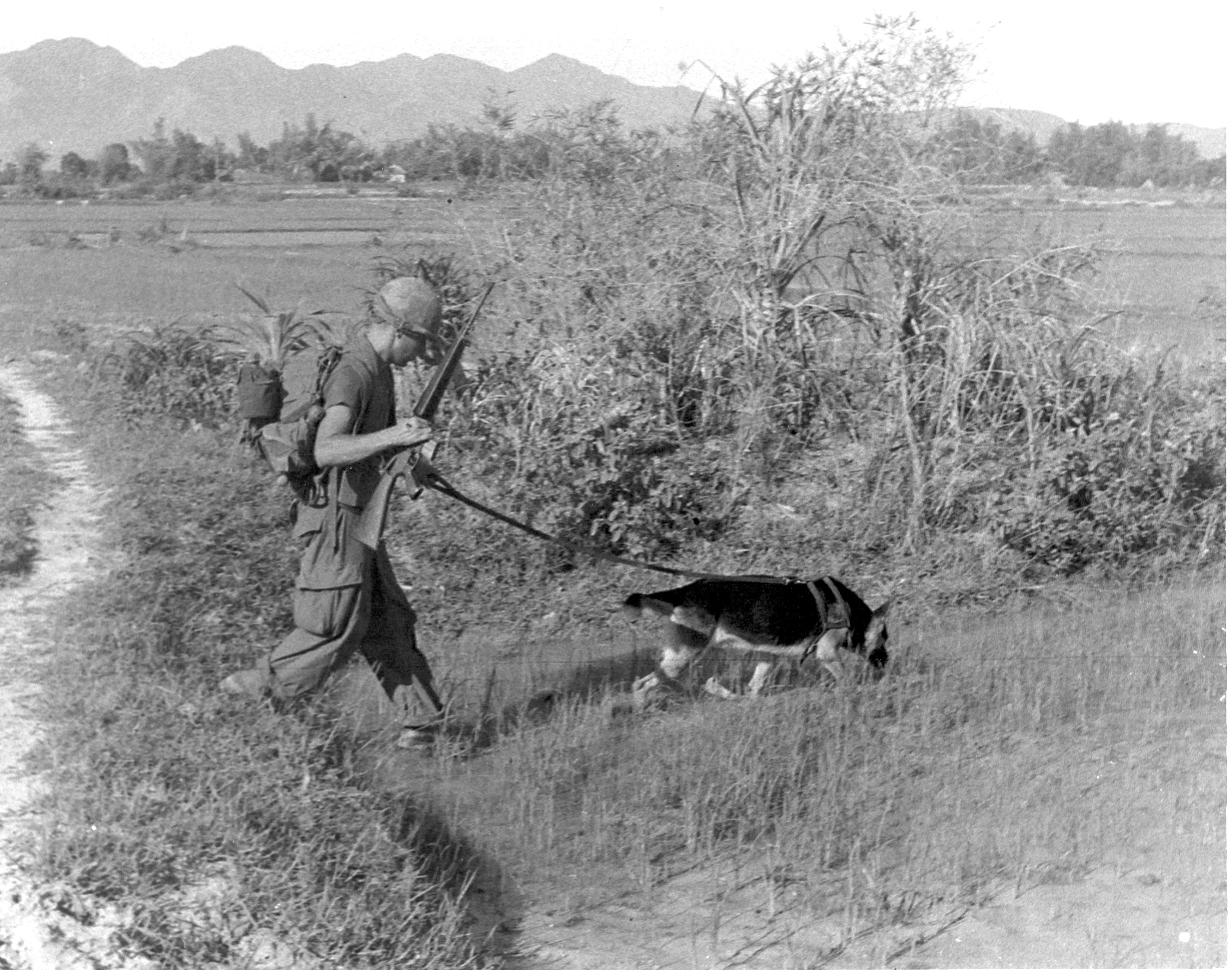 Vietnam War Dog Training