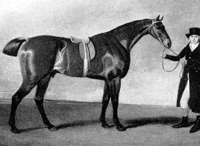Sir Harry, Derby winner.jpg