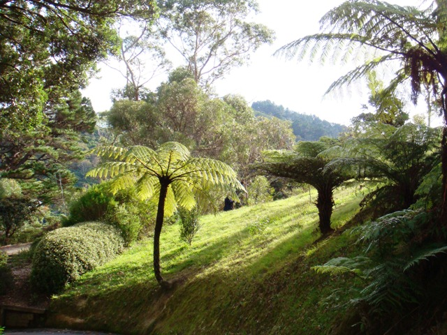 The Wellington Botanic Garden, New Zealand