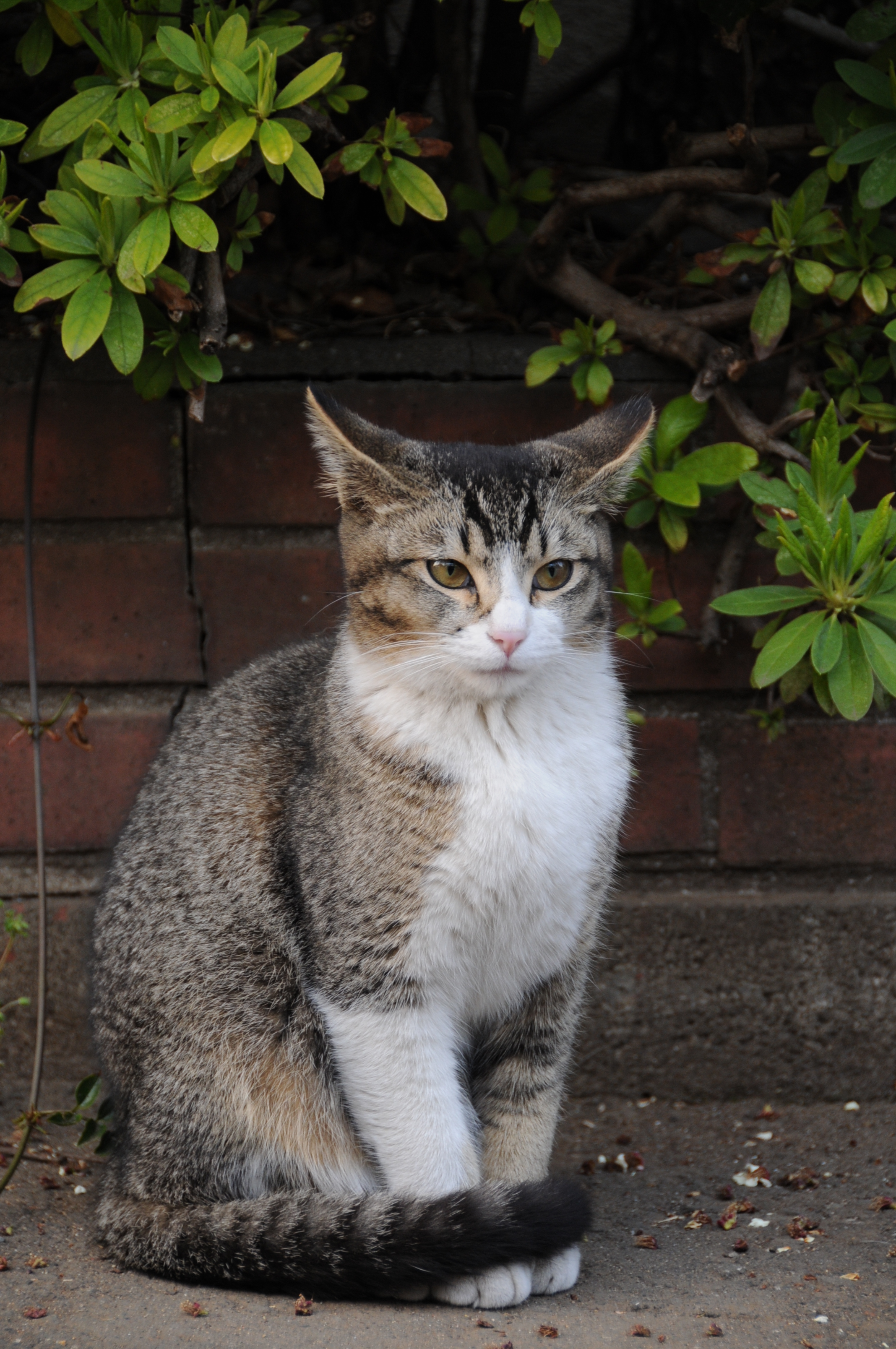 Tabby Cat Images Femalecelebrity