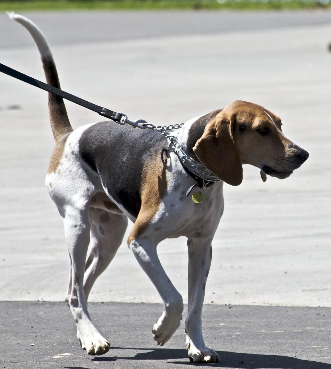 Best Dog Walking Routes Portland Maine