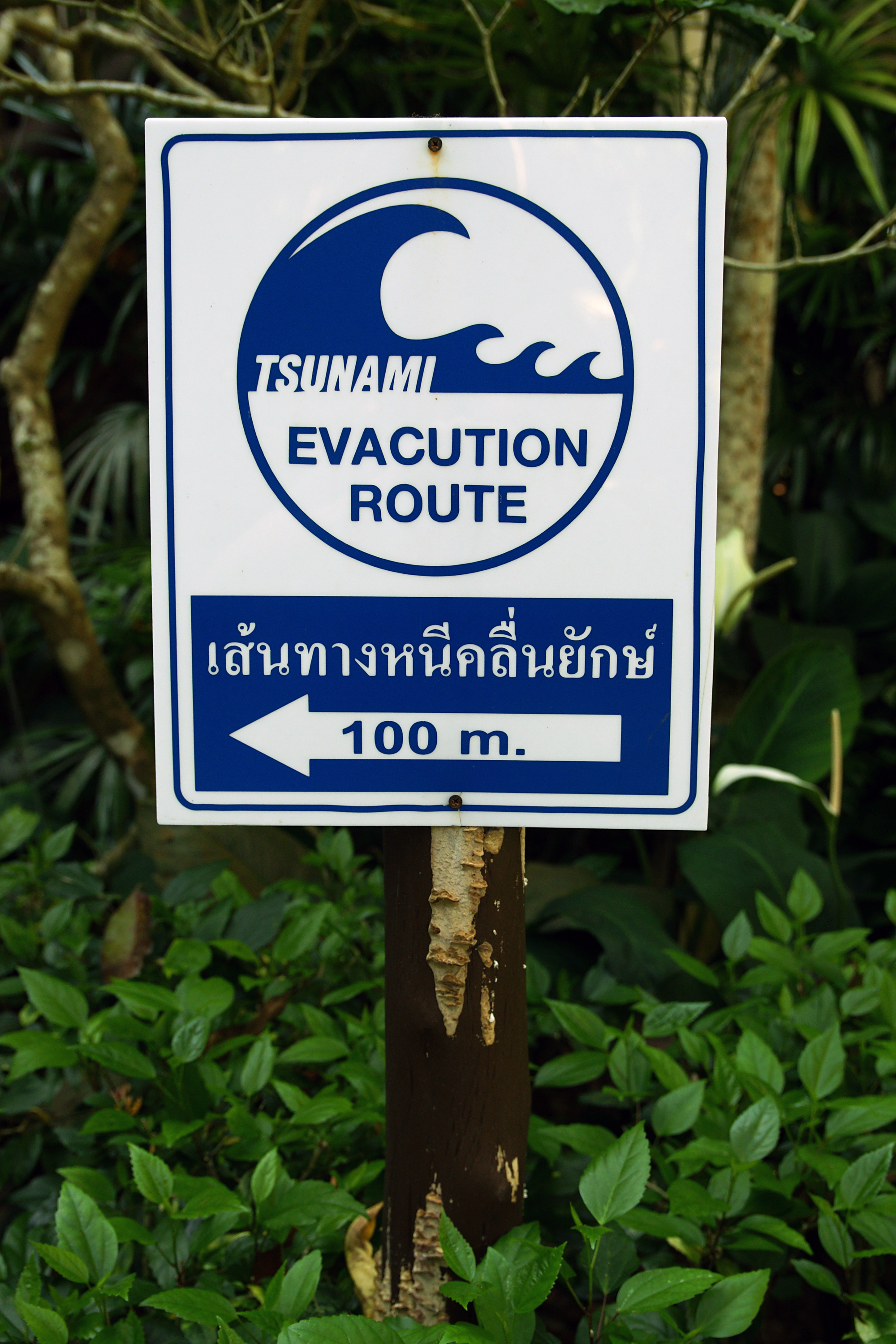 File:Tsunami warning signs Ao Nang jpg - Wikimedia Commons