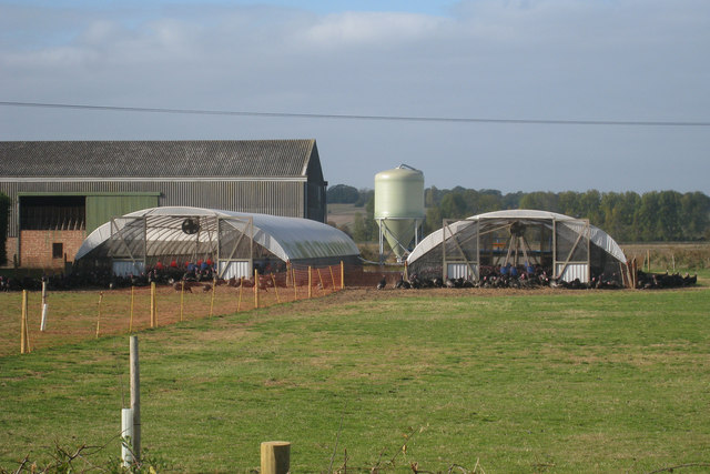 Turkeys at Priory Farm - geograph.org.uk - 1539107.jpg