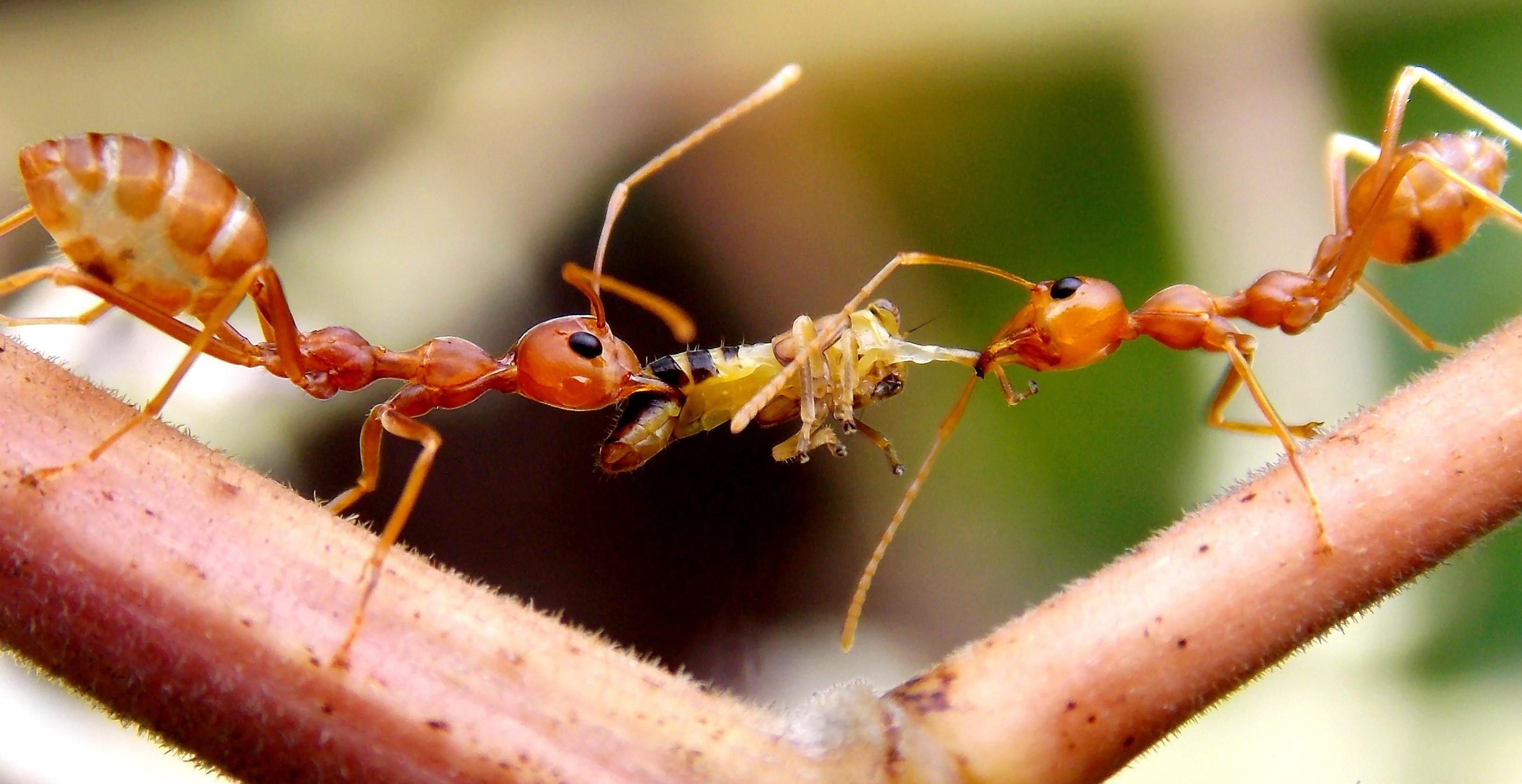 Apache Ant  Wikipedia