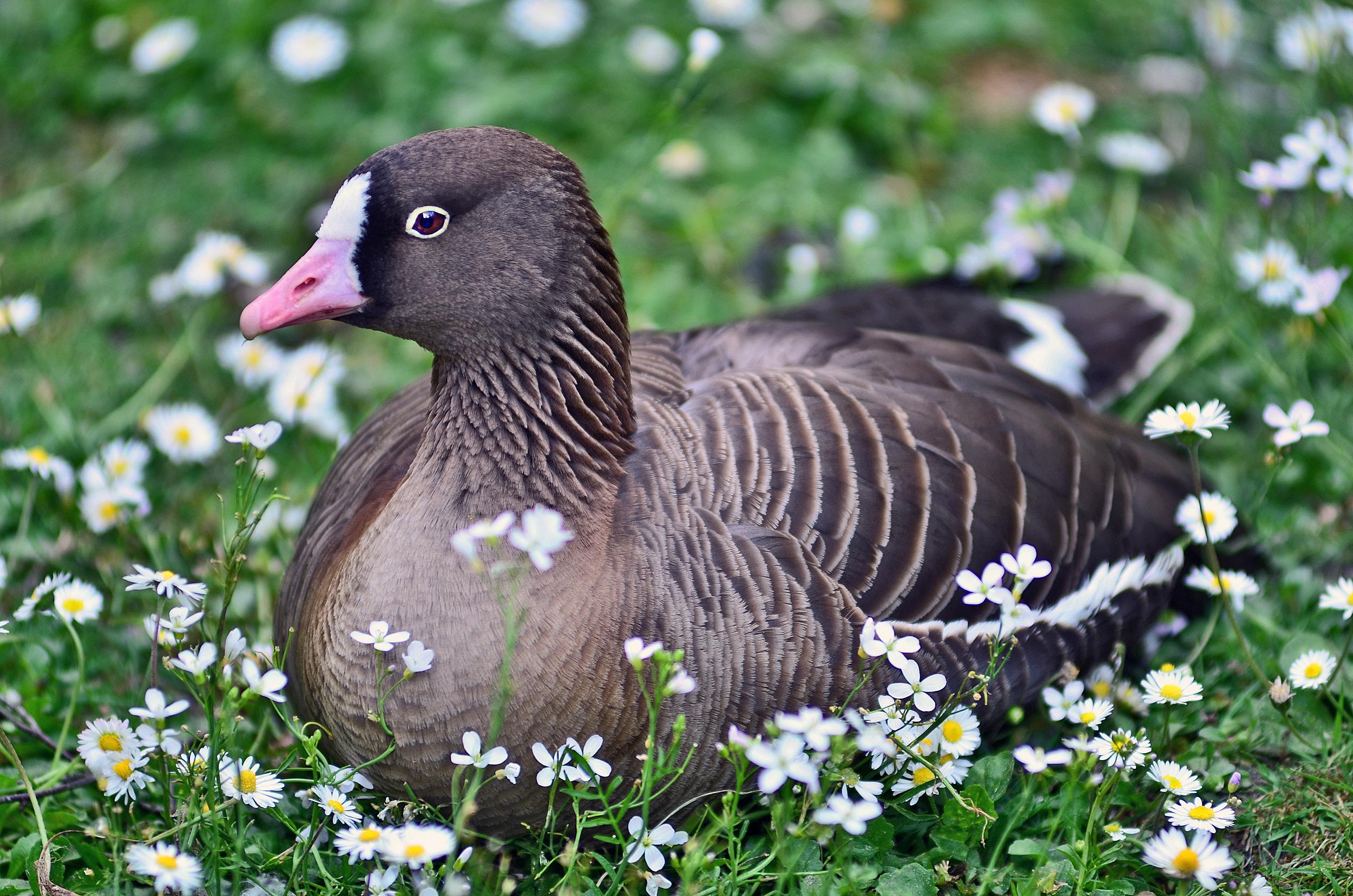 Weltvogelpark_Logo_Parkhotel_Luisenhohe