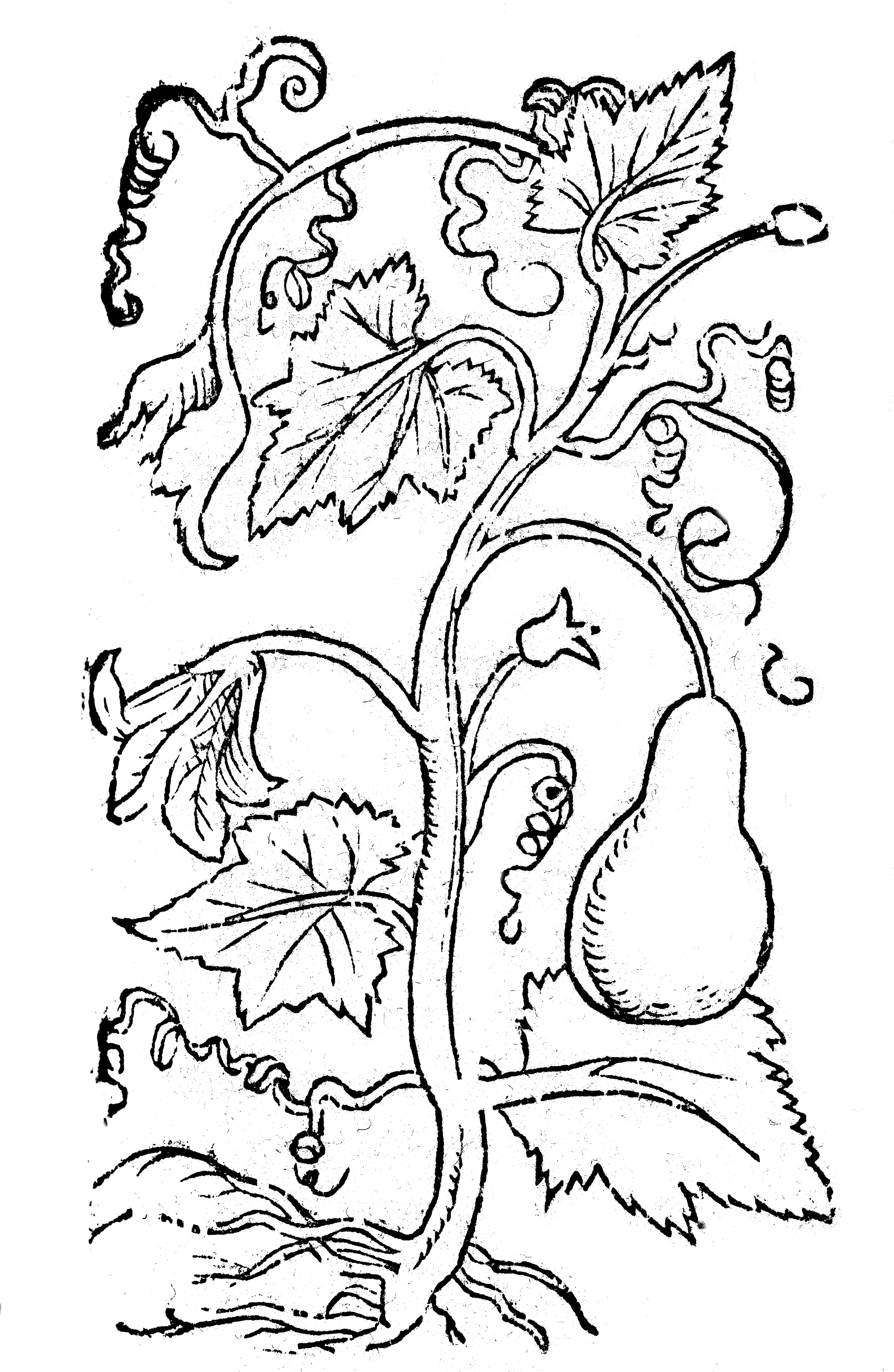 File:04 Zucca, Coloring Book BCT, 2017.jpg - Wikimedia Commons