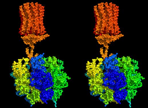 download physiologische chemie eine einfuhrung in die medizinische biochemie fur studierende der