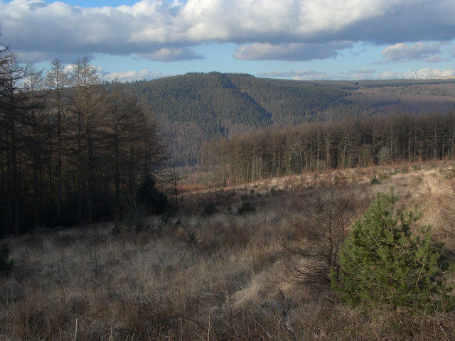 A clearing at Afan Forest Park - geograph.org.uk - 1734477