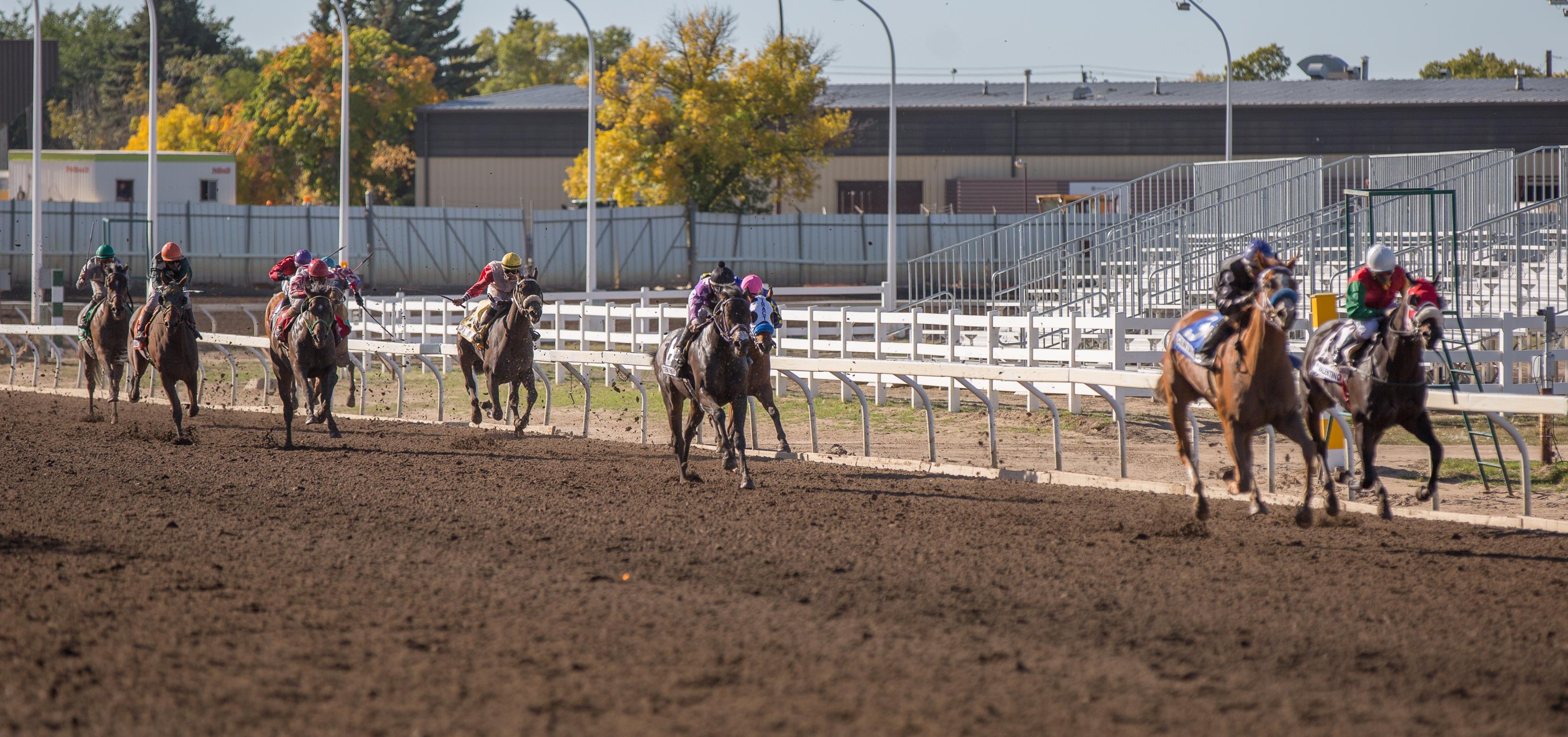File:Alberta Breeders' Fall Classic 2014 - Horse Racing (15117958700 ...