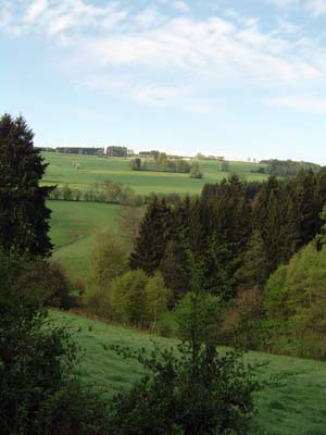 Wooded landscape in the Ardennes